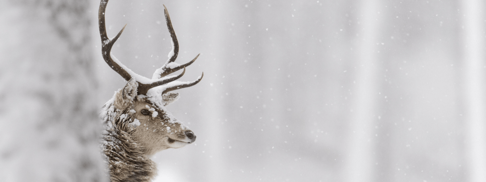 Where Stags Roar | Newtonmore Accommodation